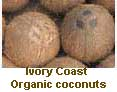 West Africa organic coconuts