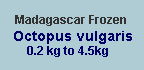 Madagascar quick frozen octopus vulgaris